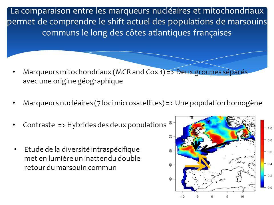 La comparaison entre les marqueurs nucléaires et mitochondriaux permet de comprendre le shift actuel des populations de marsouins communs le long des côtes atlantiques françaises