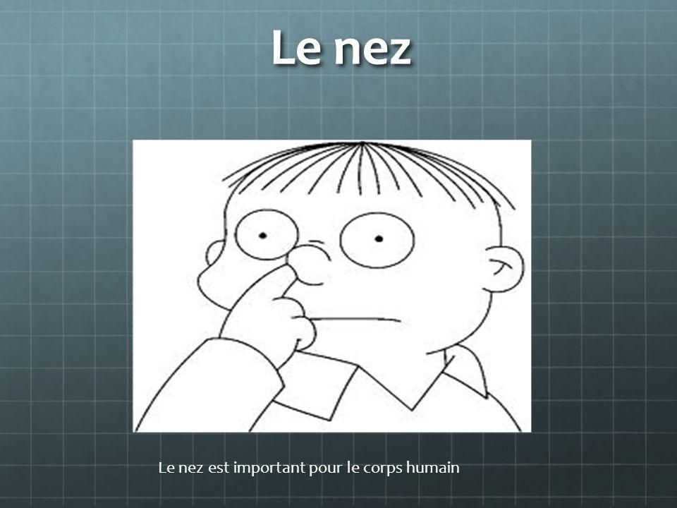 Le nez Le nez est important pour le corps humain