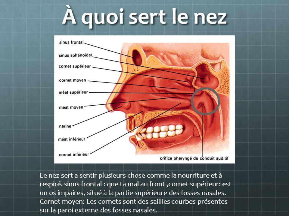 À quoi sert le nez