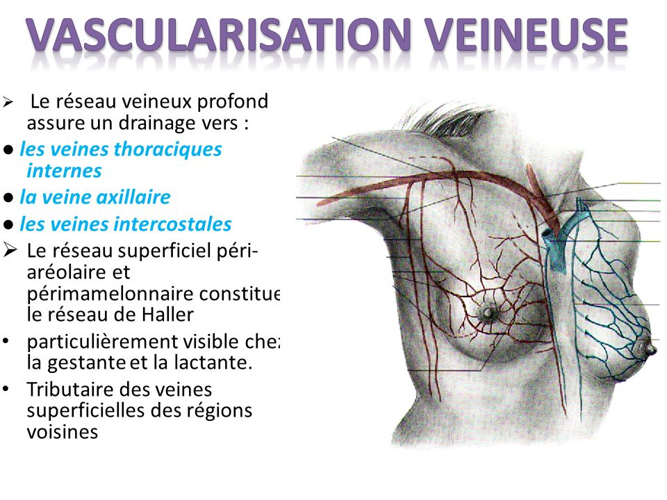 Vascularisation VEINEUSE