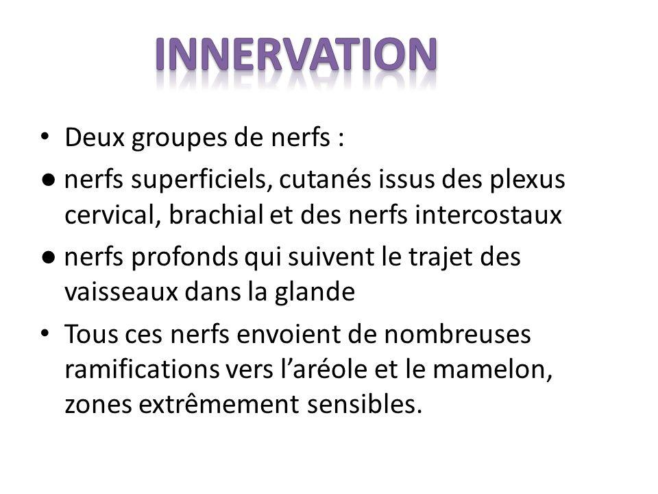 inNERVATION Deux groupes de nerfs :