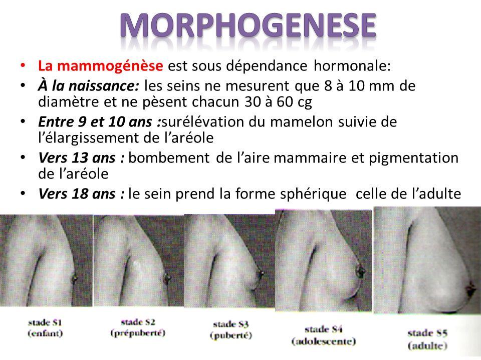 MORPHOGENESE La mammogénèse est sous dépendance hormonale: