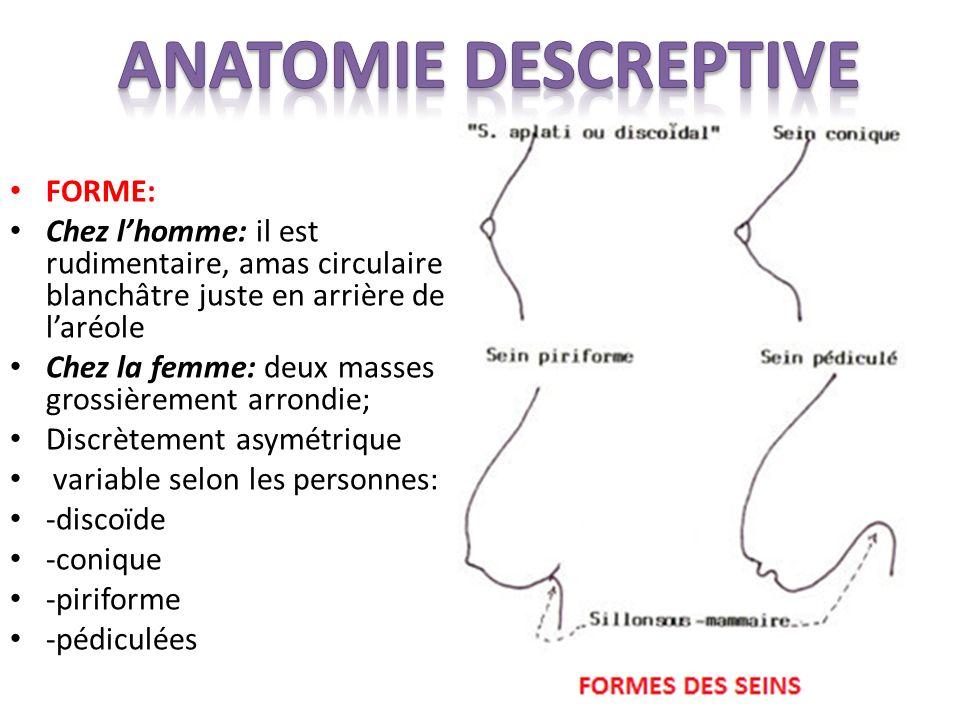 ANATOMIE DESCREPTIVE FORME: