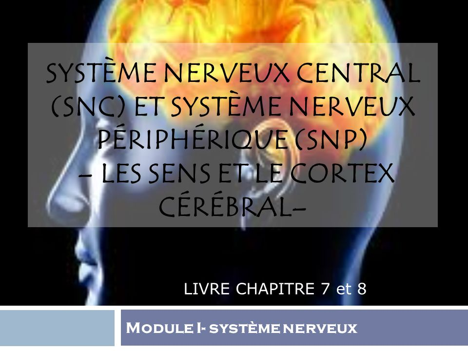Système nerveux central (SNC) et Système nerveux périphérique (SNP) – Les sens et le cortex cérébral–
