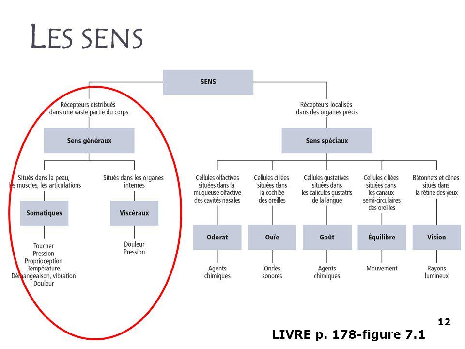 Les sens 12 LIVRE p. 178-figure 7.1