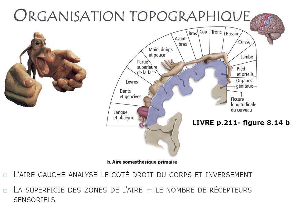Organisation topographique