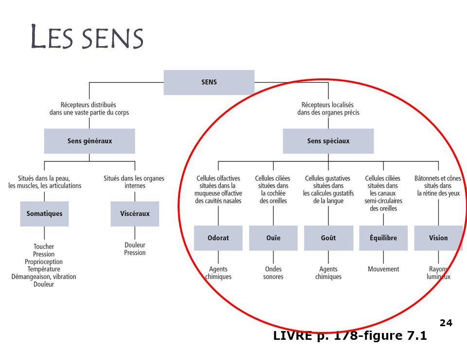 Les sens 24 LIVRE p. 178-figure 7.1