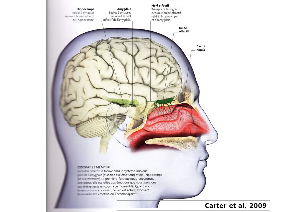 Carter et al, 2009
