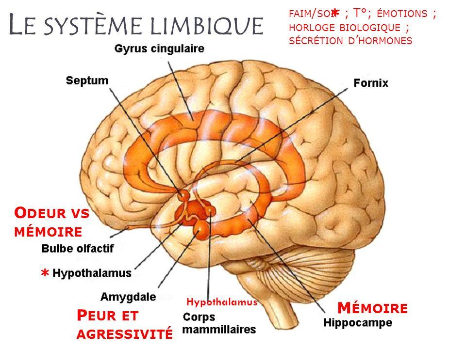 Le système limbique * Odeur vs mémoire * Mémoire Peur et agressivité