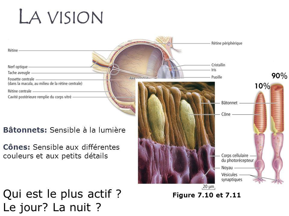 La vision Qui est le plus actif Le jour La nuit 90% 10%