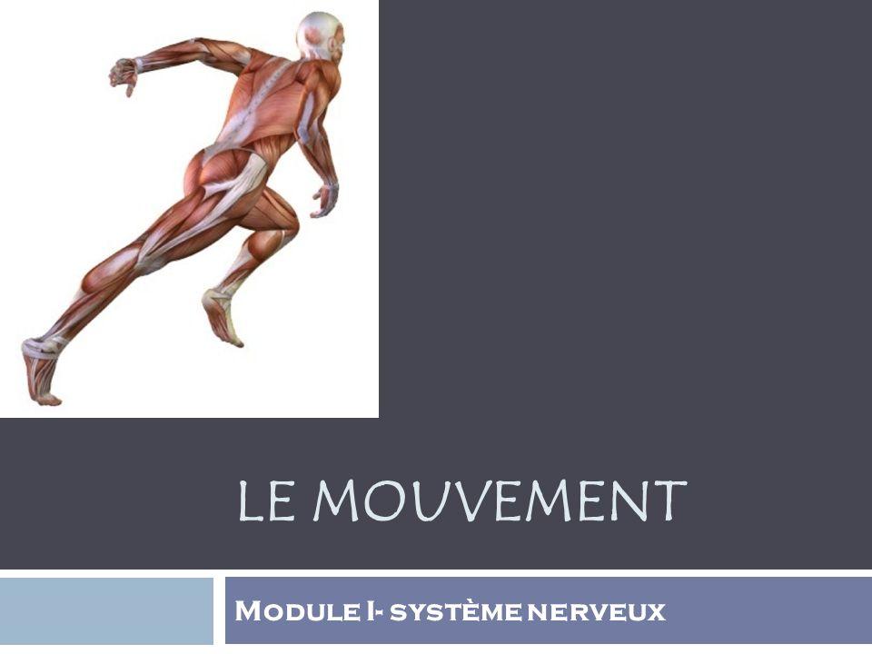 Module I- système nerveux