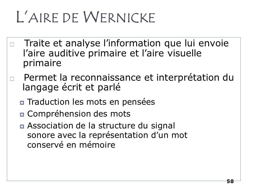 L'aire de Wernicke Traite et analyse l'information que lui envoie l'aire auditive primaire et l'aire visuelle primaire.