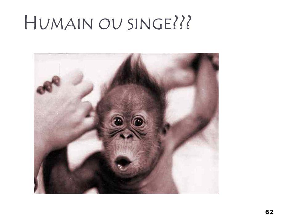 Humain ou singe