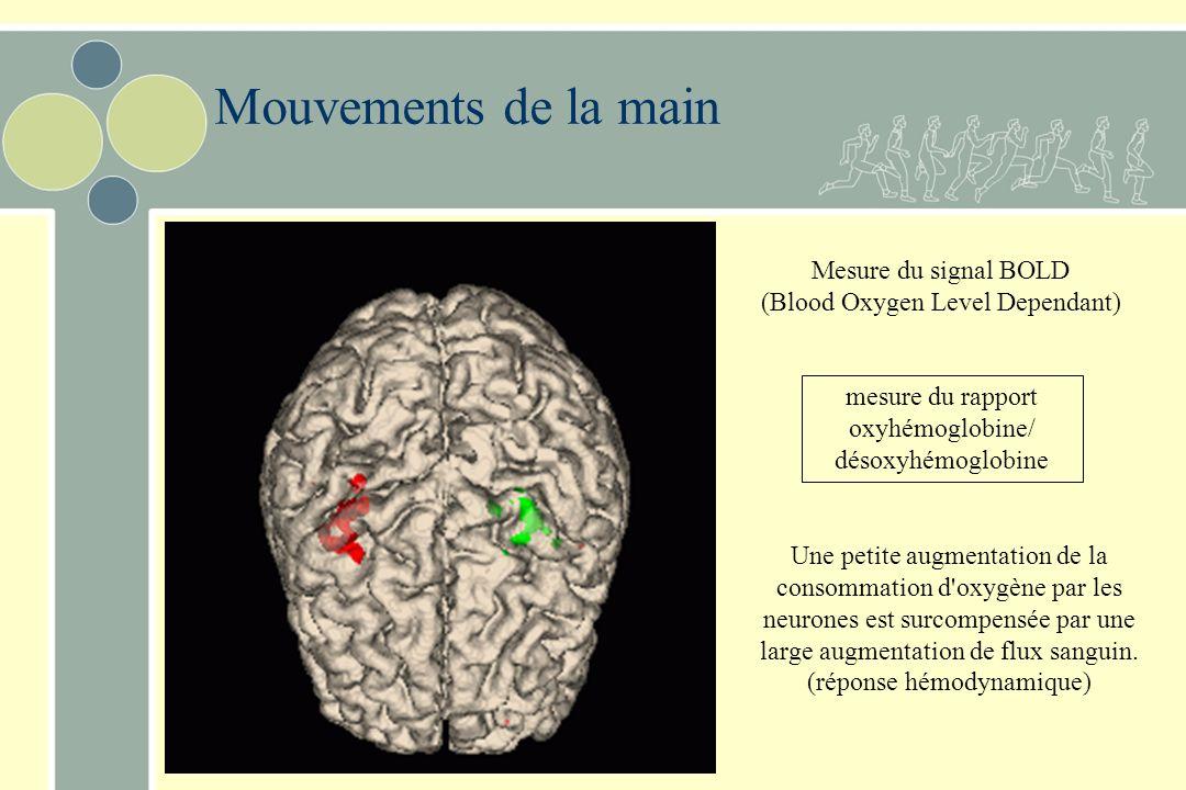 Mouvements de la main Mesure du signal BOLD (Blood Oxygen Level Dependant) mesure du rapport oxyhémoglobine/ désoxyhémoglobine.