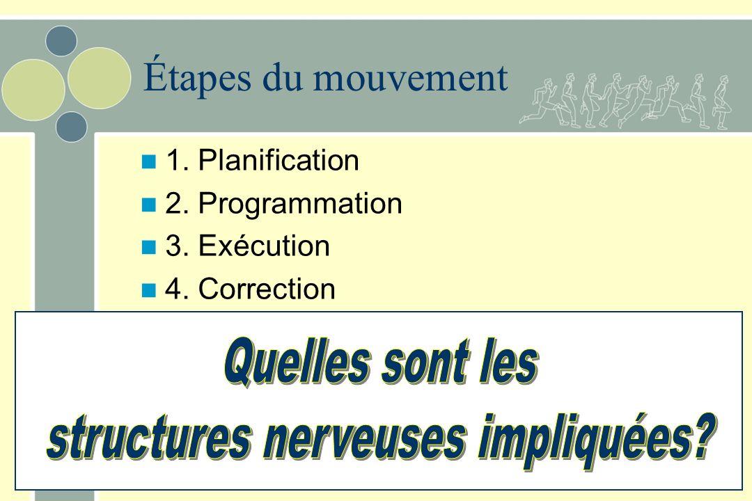structures nerveuses impliquées
