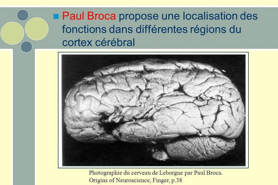 Paul Broca propose une localisation des fonctions dans différentes régions du cortex cérébral