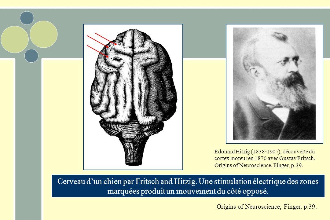 Edouard Hitzig (1838-1907), découverte du cortex moteur en 1870 avec Gustav Fritsch.