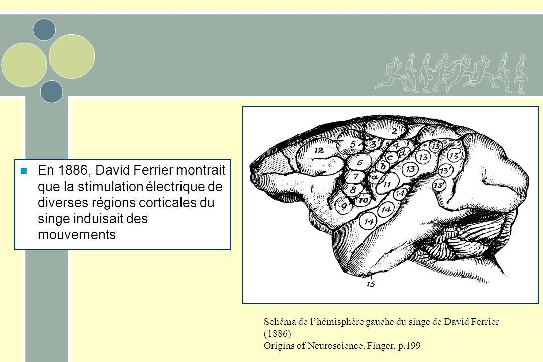 En 1886, David Ferrier montrait que la stimulation électrique de diverses régions corticales du singe induisait des mouvements
