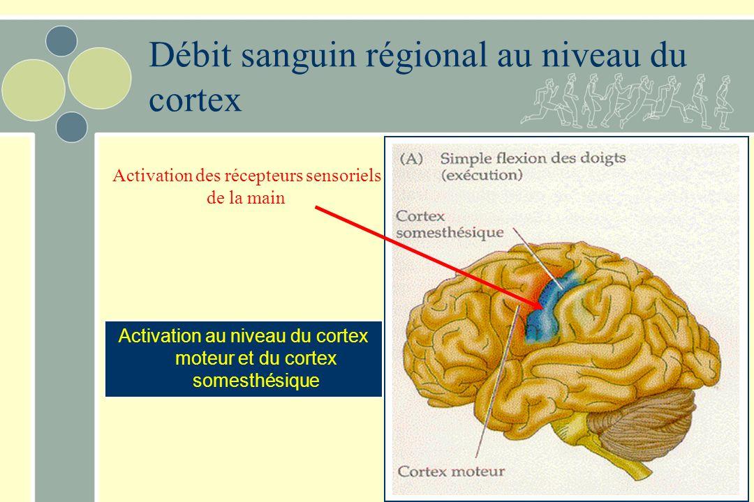 Débit sanguin régional au niveau du cortex