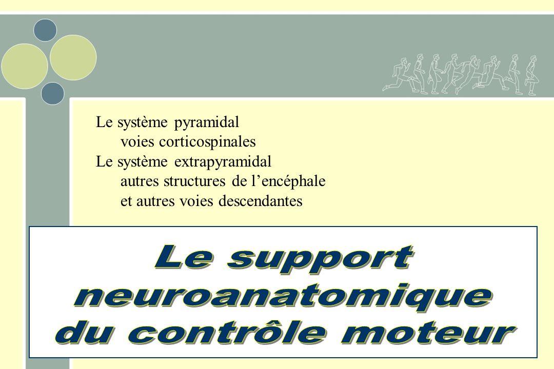 Le support neuroanatomique du contrôle moteur Le système pyramidal
