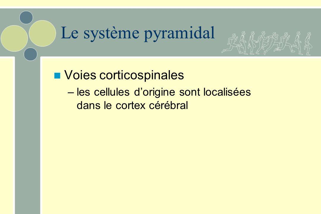 Le système pyramidal Voies corticospinales