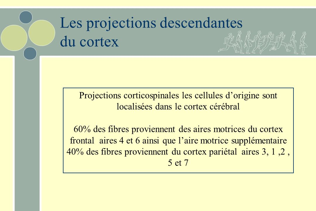 Les projections descendantes du cortex