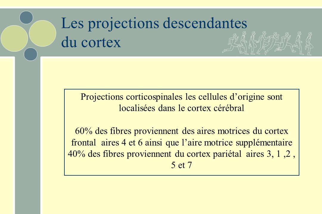 Les projections descendantes du cortex