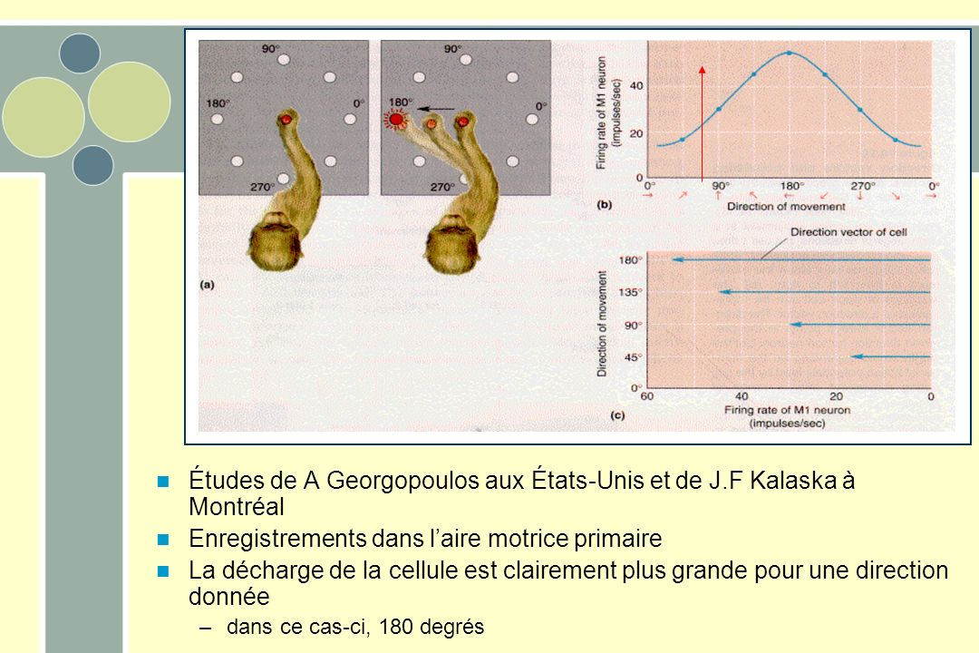 Études de A Georgopoulos aux États-Unis et de J.F Kalaska à Montréal