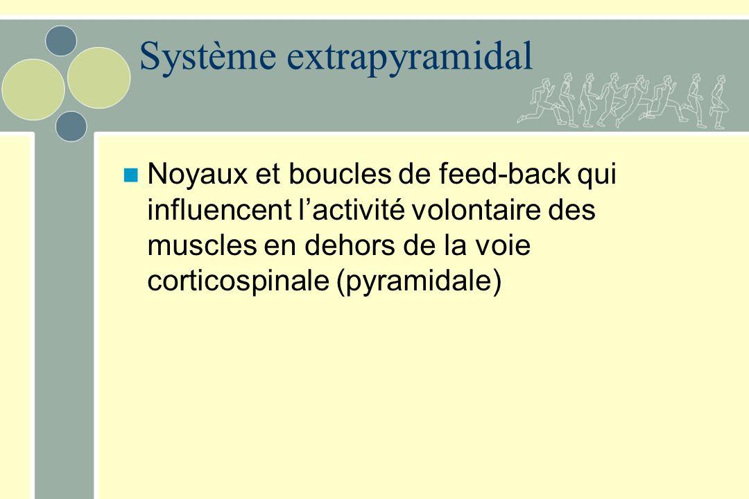 Système extrapyramidal