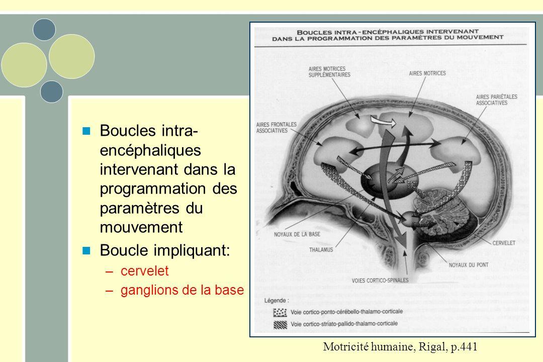 Boucles intra-encéphaliques intervenant dans la programmation des paramètres du mouvement