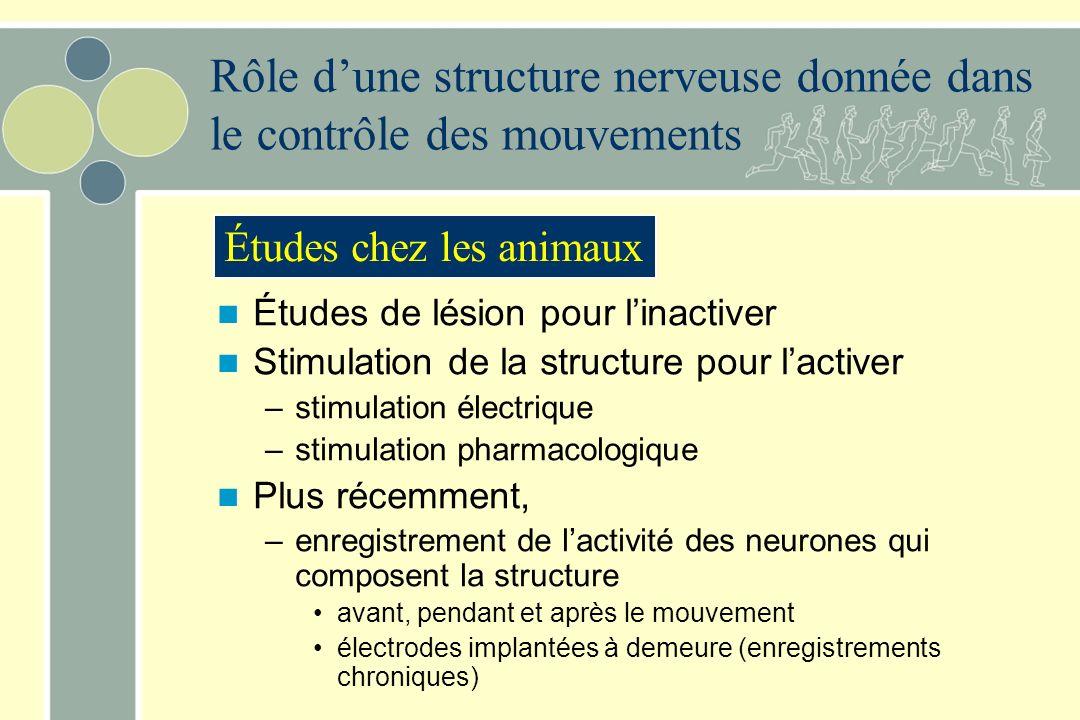Rôle d'une structure nerveuse donnée dans le contrôle des mouvements
