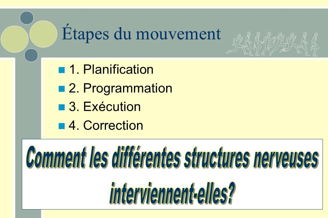 Comment les différentes structures nerveuses