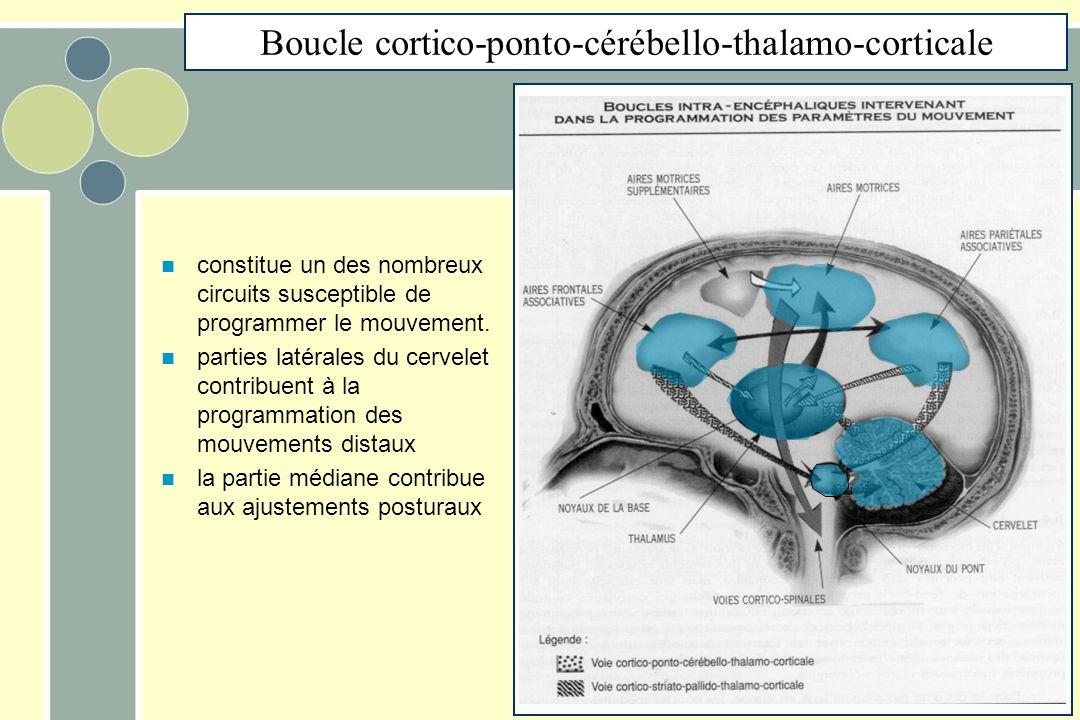Boucle cortico-ponto-cérébello-thalamo-corticale