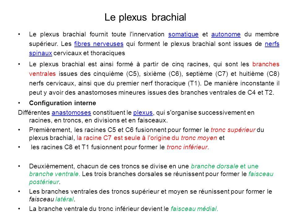 Le plexus brachial