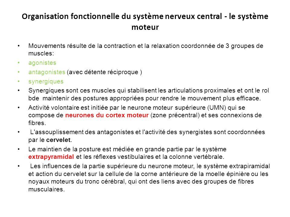 Organisation fonctionnelle du système nerveux central - le système moteur