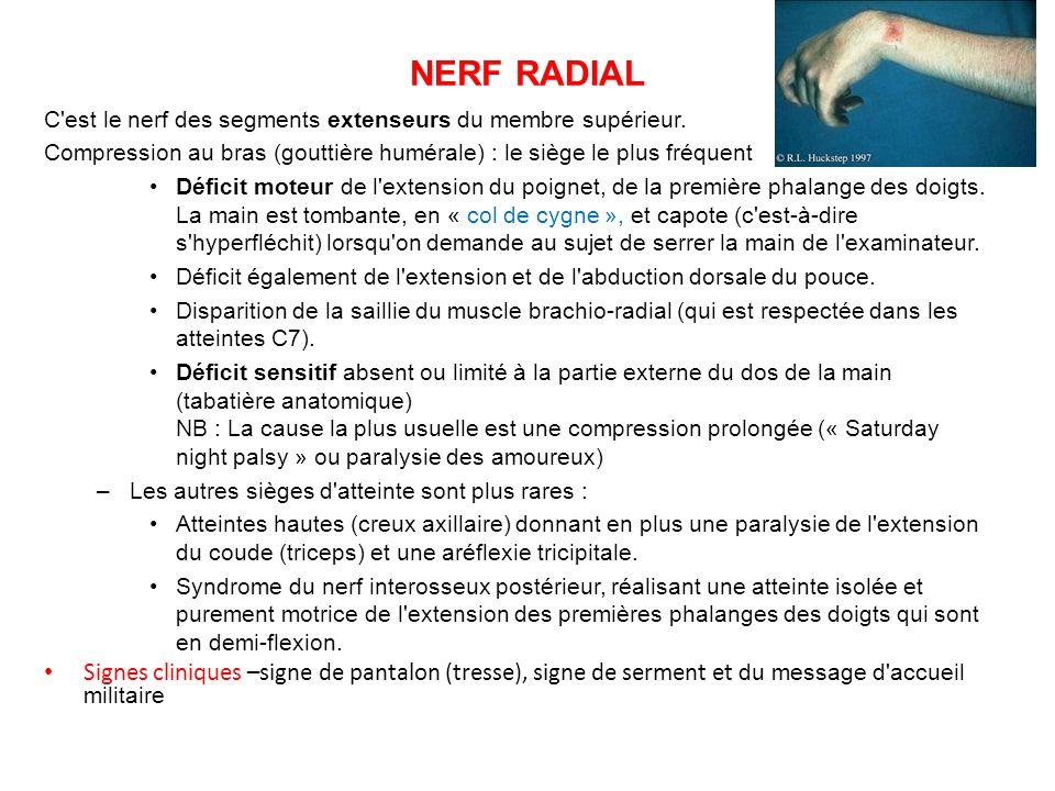 NERF RADIAL C est le nerf des segments extenseurs du membre supérieur. Compression au bras (gouttière humérale) : le siège le plus fréquent.