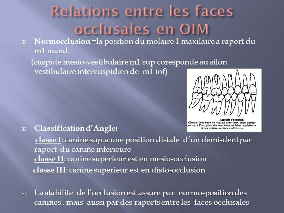 Relations entre les faces occlusales en OIM
