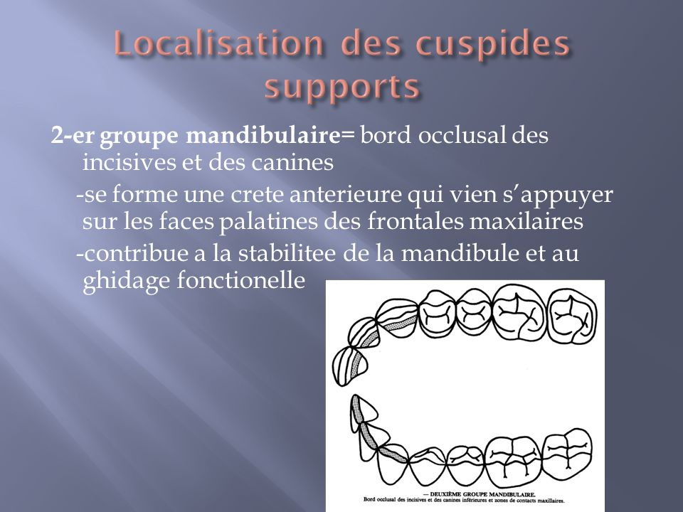 Localisation des cuspides supports
