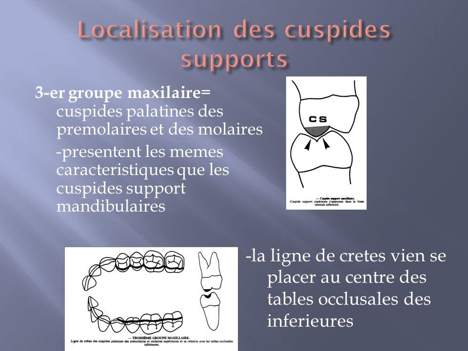 Localisation des cuspides supports