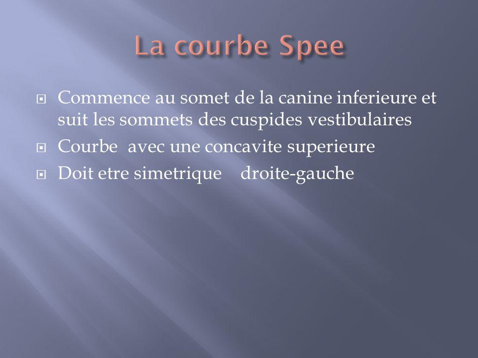 La courbe Spee Commence au somet de la canine inferieure et suit les sommets des cuspides vestibulaires.
