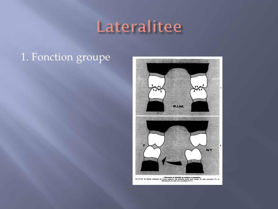 Lateralitee 1. Fonction groupe