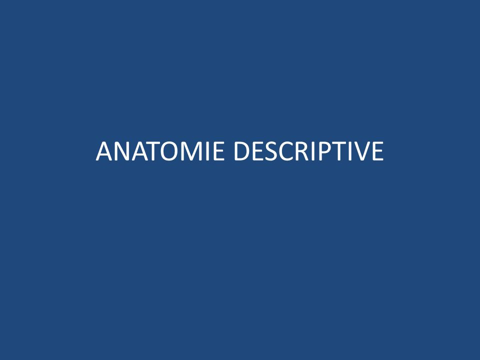 ANATOMIE DESCRIPTIVE