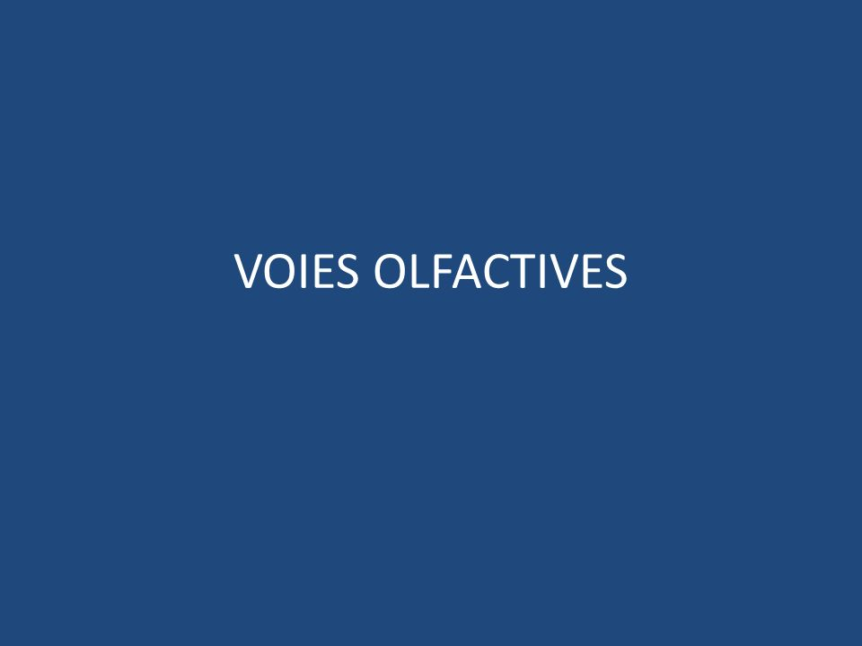 VOIES OLFACTIVES