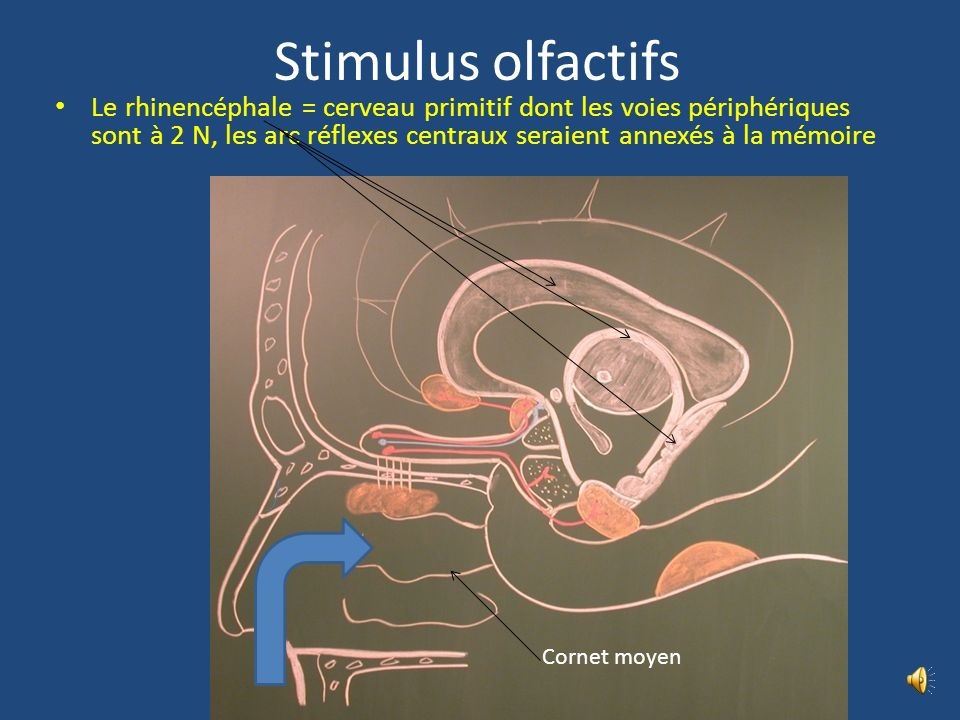 Stimulus olfactifs