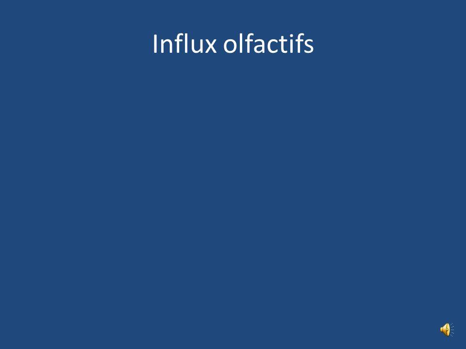 Influx olfactifs