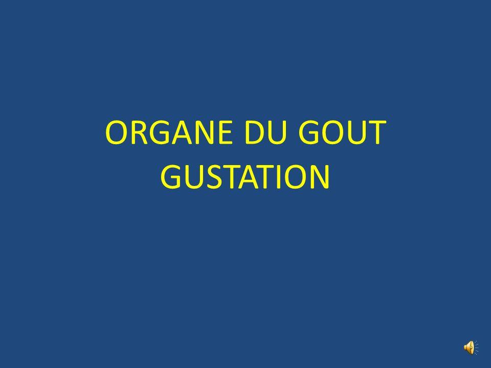 ORGANE DU GOUT GUSTATION