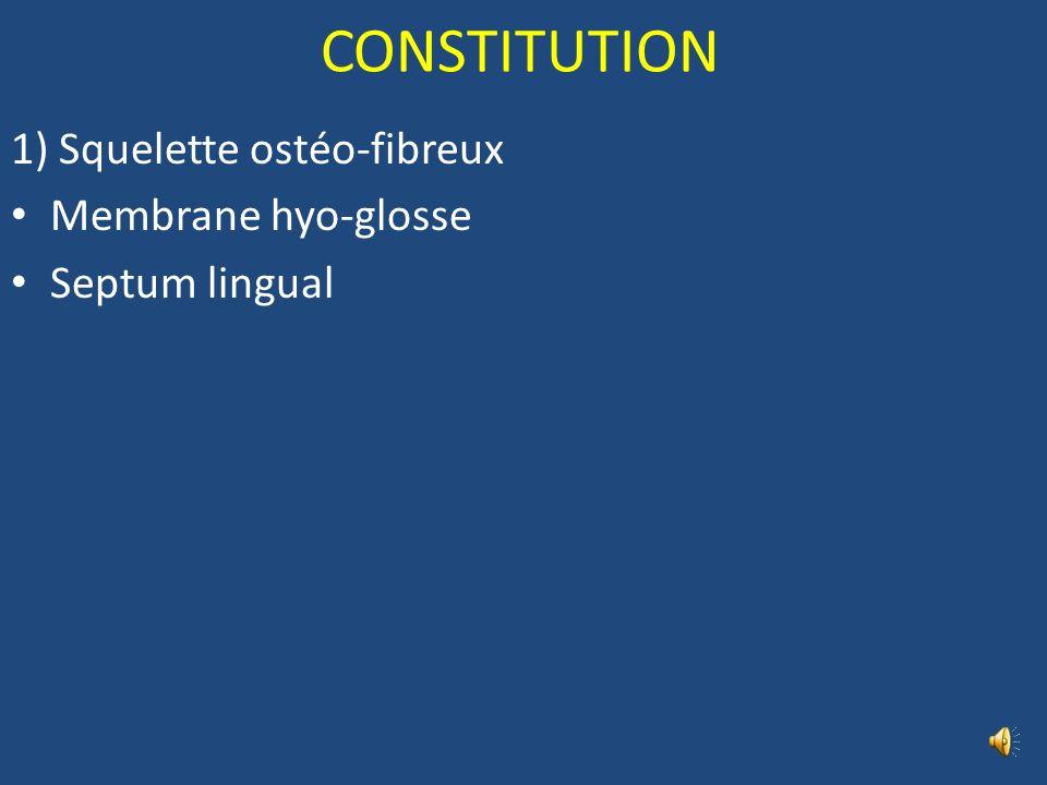 CONSTITUTION 1) Squelette ostéo-fibreux Membrane hyo-glosse