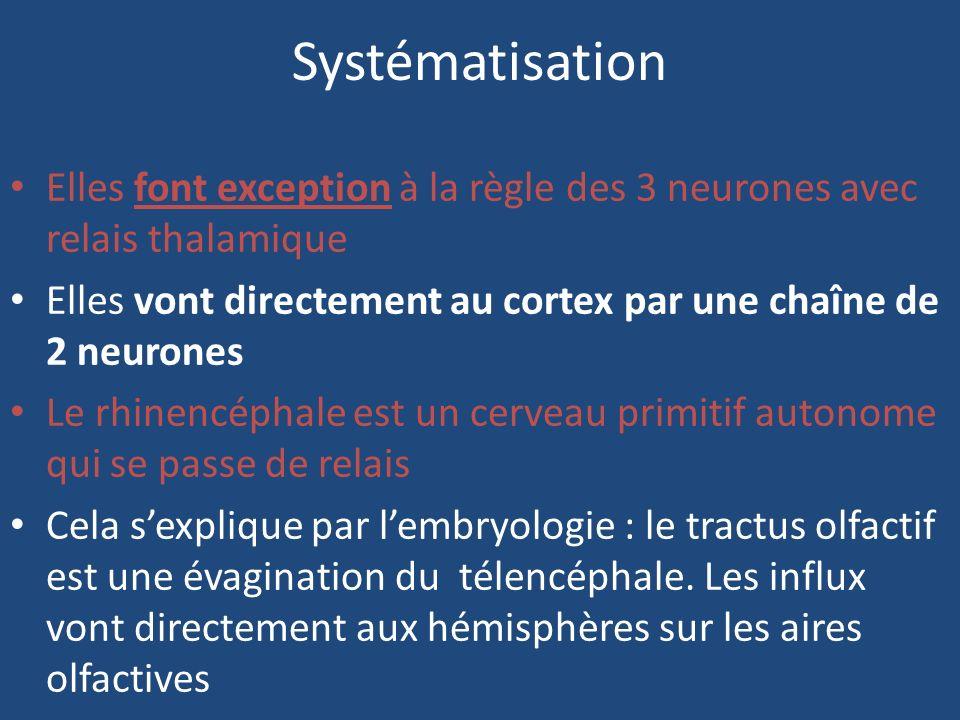Systématisation Elles font exception à la règle des 3 neurones avec relais thalamique. Elles vont directement au cortex par une chaîne de 2 neurones.
