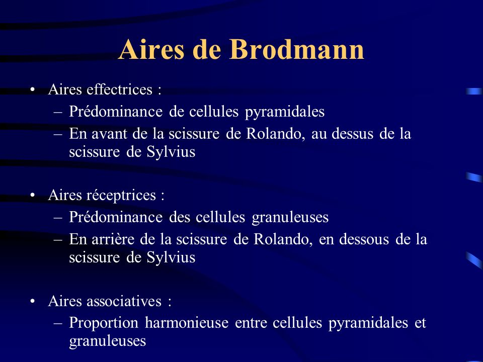 Aires de Brodmann Prédominance de cellules pyramidales
