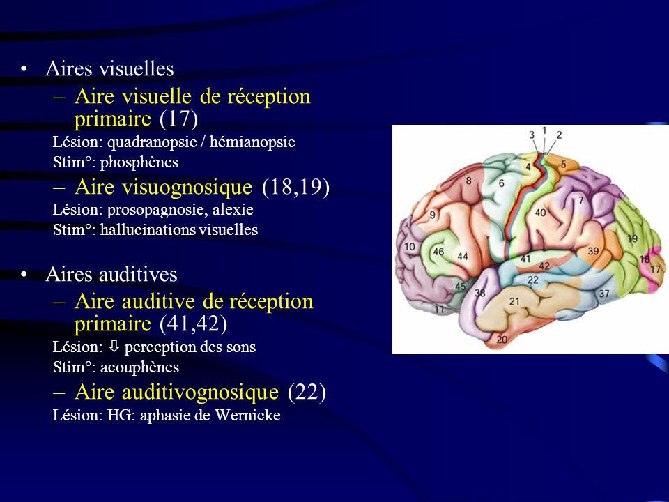 Aire visuelle de réception primaire (17)